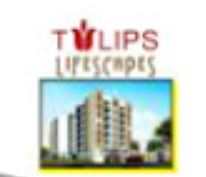 LOGO - DNG Tulips Life Scapes