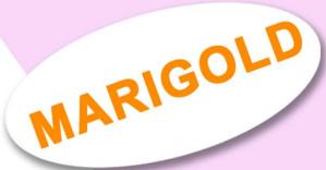 LOGO - Jind Marigold