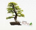 LOGO - Magnolia Bonsai Nano Homes