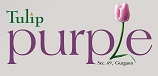 LOGO - Tulip Purple